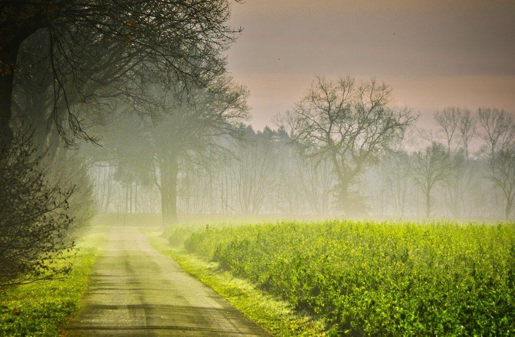 autumn-3900048 秋 日の出 道路 霧 菜種のフィールド ビンズイ 黄色 フォレスト 木 地獄 太陽 光