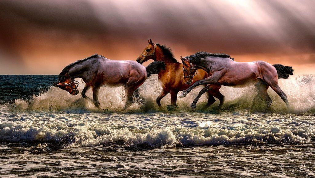 animal-3099035 動物 馬 動物相 自然 騎兵 海 Galopping 3 哺乳類 茶色の自然